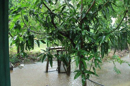 Sigiri Choona Lodge : вид из номера