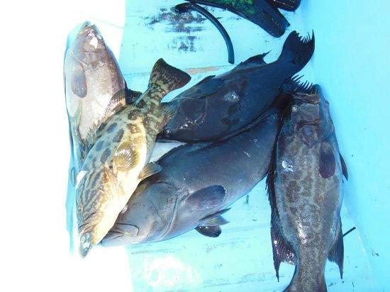 Palapas Ventana: Grouper