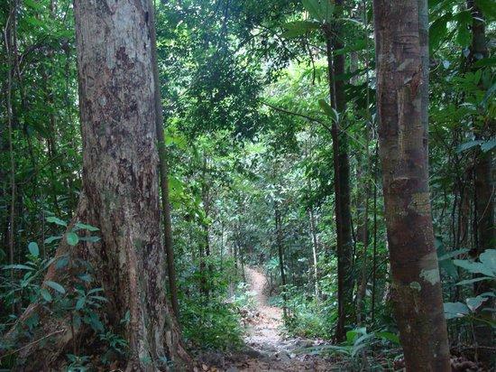 Klong Plu Waterfall: le nature path