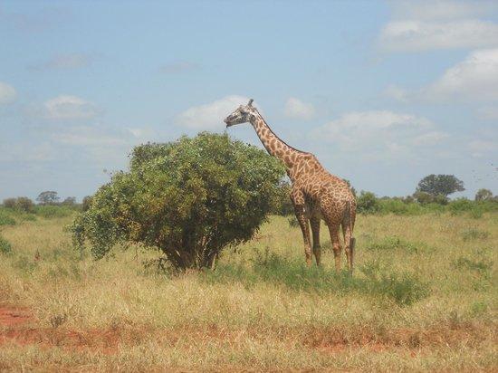 Julius Tact Safaris - Private Day Trips: A great Safari