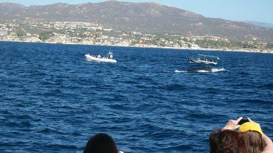 Ecocat Catamaran Tours : Very close to the whales