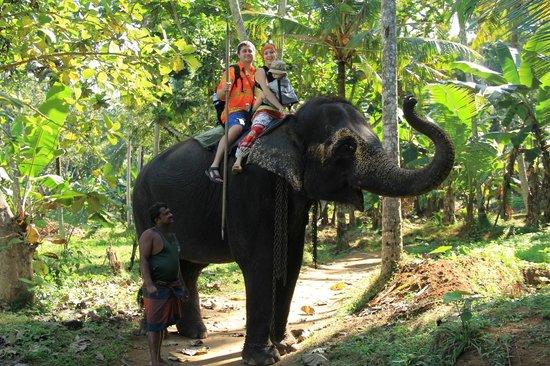 Pinnawala Elephant Orphanage: Слон волосат!