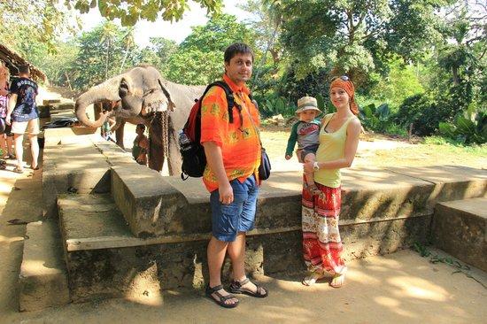 Millennium Elephant Foundation: Живое общение со слонами
