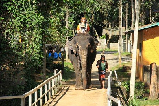 Millennium Elephant Foundation: Прокатиться!