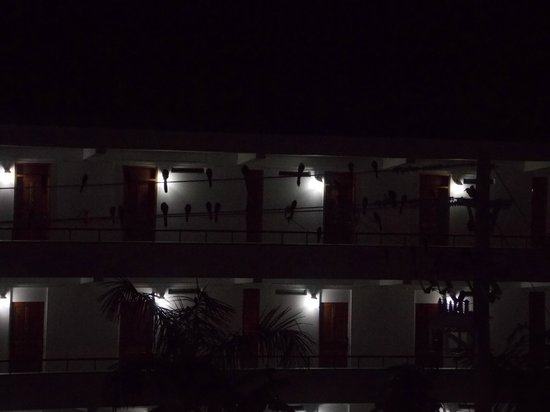 The Great House: Birds on wire outside hotel at night
