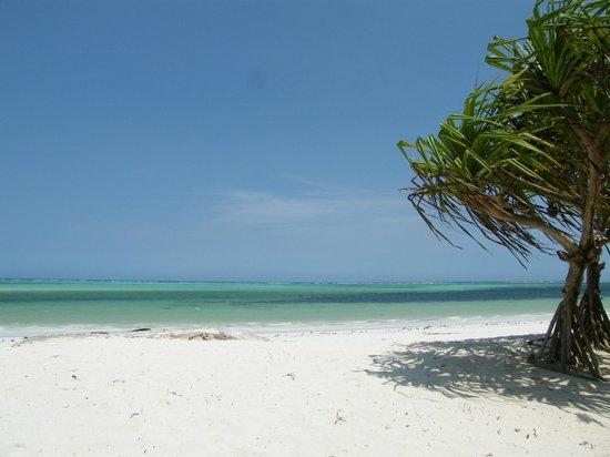 Neptune Pwani Beach Resort & Spa: Vue de la plage