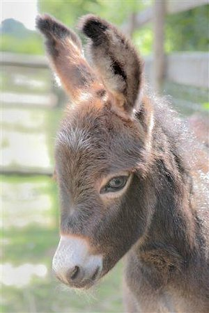 The Playbarn: Miniature Donkeys on the Childrens Farm