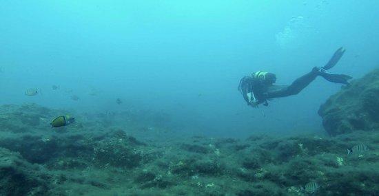 Mermaid Diving: Las Eras