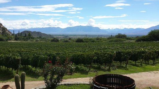 Finca las Nubes - Bodega Jose L. Mounier: What a view!