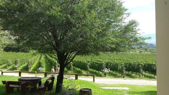Finca las Nubes - Bodega Jose L. Mounier: Gorgeous vineyards