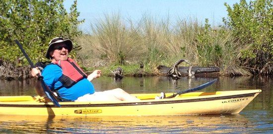 Everglades Area Tours: Front-end of the same BIG 'gator