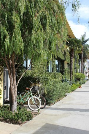 Oceana Beach Club Hotel : hotel front with bicycles for use