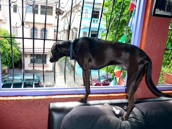 Hostal Mamallena: Choco guarding the premises