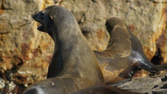 Cabo Expeditions: Leones Marinos muy amables también