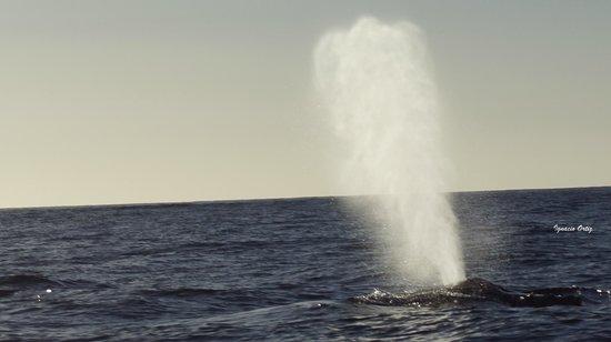 Cabo Expeditions: Exhalación increíble