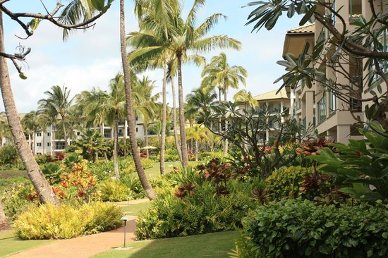 Marriott's Kauai Lagoons - Kalanipu'u : View of the resort grounds