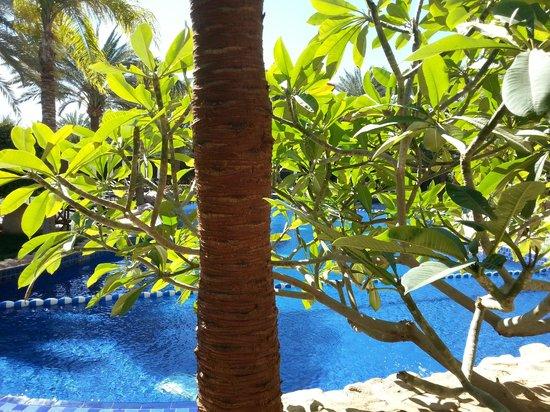 Mövenpick Resort & Residence Aqaba: Pool area