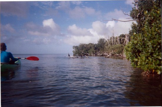 Danger Charters: Ocean Kayaking