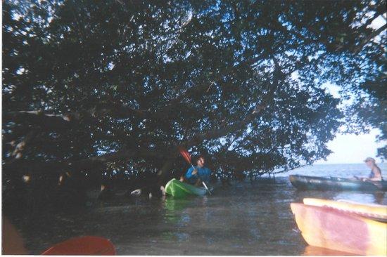 Danger Charters: Mangrove island
