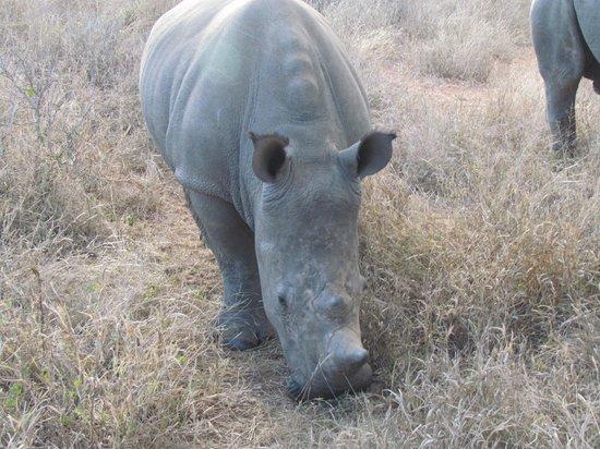Little Garonga: Rhino