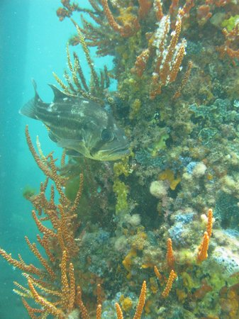 Busselton Guest House - Beds by the Bay: underwaterworld1