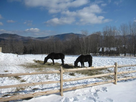 The Mountain Top Inn & Resort: Horses