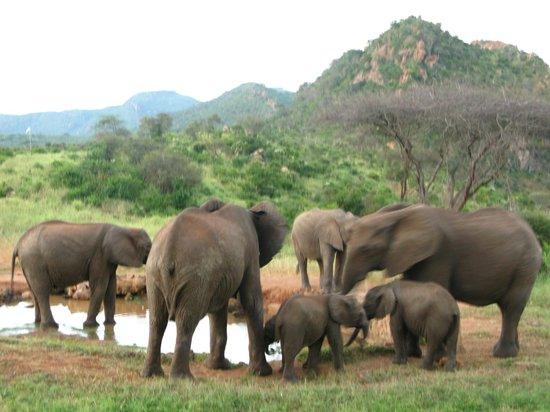 Ngulia Safari Lodge: Водопой