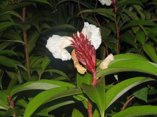 Kebun Villas & Resort: Flowers in the garden