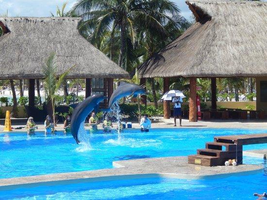 Hotel Barcelo Maya Beach : Nueva pileta con delfines para ver show gratis o nadar con ellos