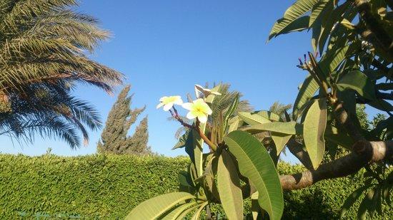 Continental Hotel Hurghada : Во дворе VIP-домика