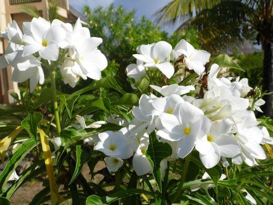 Jalsa Beach Hotel & Spa - Mauritius: Flowers in the garden