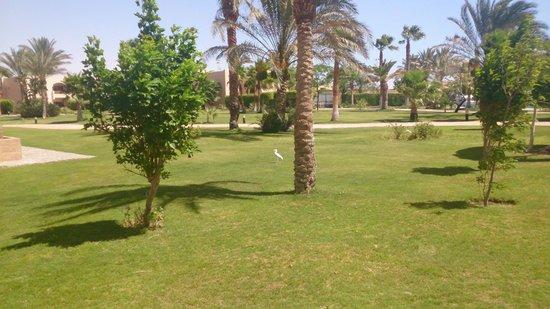 Continental Hotel Hurghada : Цапля на территории гуляет