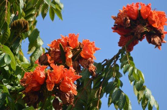 La Fuente Del Puente: beautiful tree just off the terrace