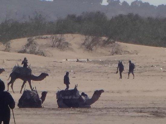 Essaouira Beach : Os camelos aguardando os turistas