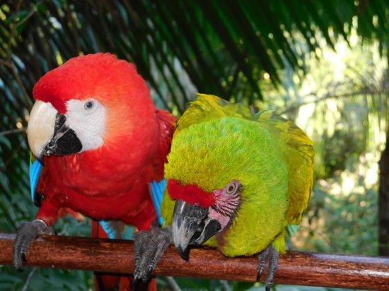Vallarta Adventures - Las Caletas Beach Hideaway: Macaws