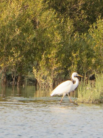 Anantara Eastern Mangroves Hotel & Spa: Tierwelt des vor dem Hotel befindlichen Mangrovenwald