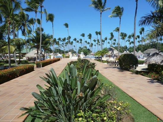 Sirenis Punta Cana Resort Casino & Aquagames: jardin