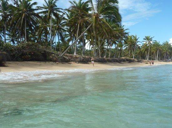 Sirenis Punta Cana Resort Casino & Aquagames: belle plage