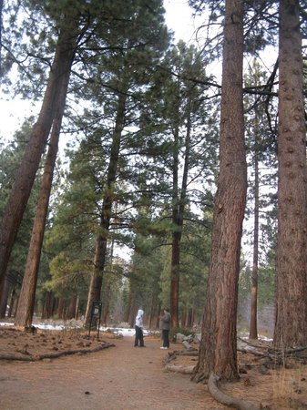 Lake Tahoe Nevada State Park : trail in Aspen Grove