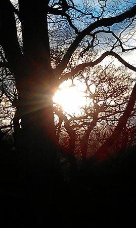 Druids Caves: sun through trees at druids rocks