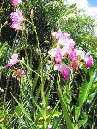 Xandari Resort & Spa: Orchids blooming along a walkway
