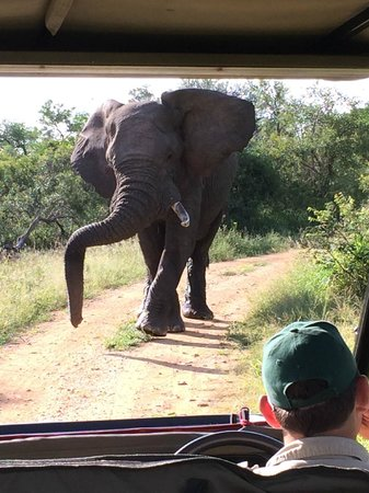 Hamiltons Tented Safari Camp: Elephant
