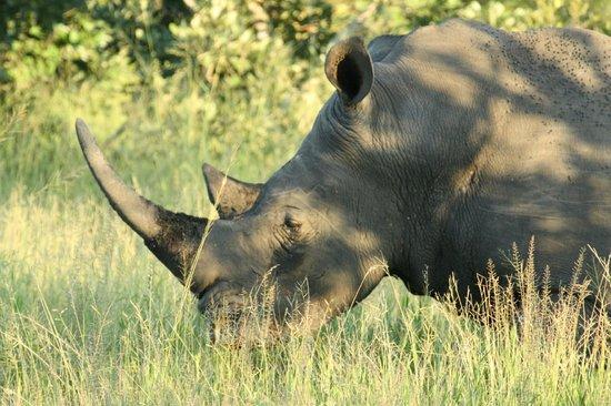 Hamiltons Tented Safari Camp: Rhino
