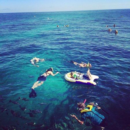 Spirit Snorkeling: My family enjoying the reef