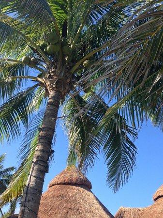 Mahekal Beach Resort: natural beauty