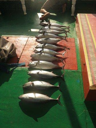 Filitheyo Island Resort : The Tuna we caught on fishing trip
