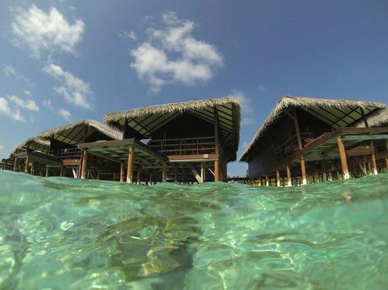 Filitheyo Island Resort : The Water Villas