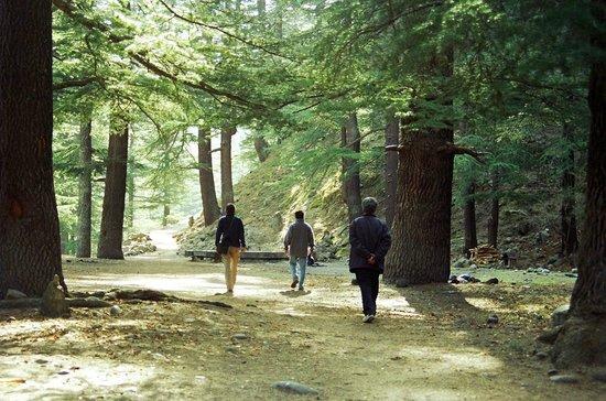 Baikunth Adventure Camp : Walk to Batseri