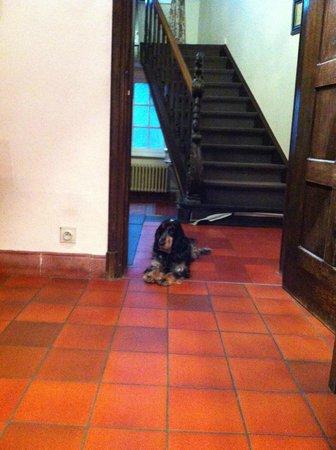 Hotel Egmond : Puppy dog knows his boundry