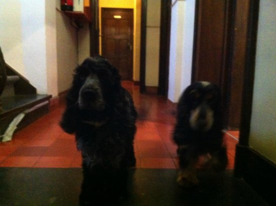 Hotel Egmond: How cute and well behaved
